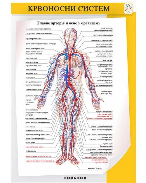 БП080 -Крвоток  (постер)