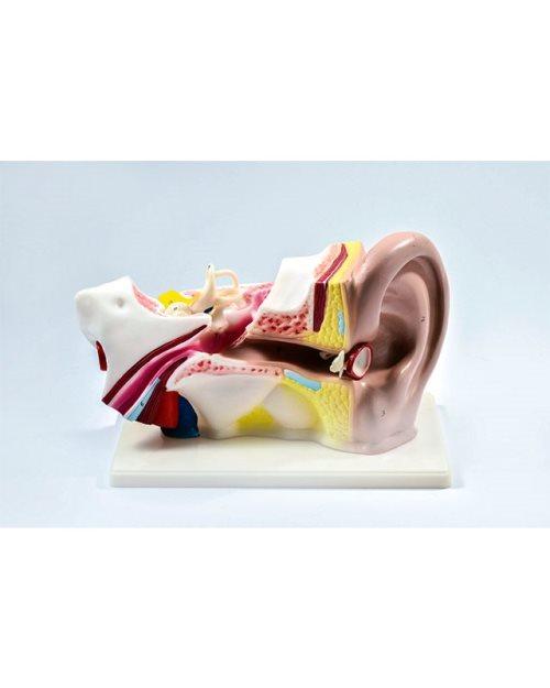 БМ015 -Пресек уха