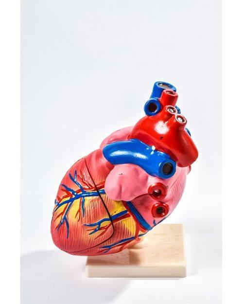 БМ029 - Младо  срце (4 дела)