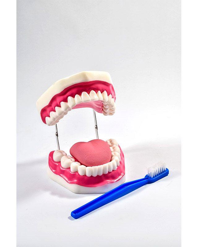 БМ016 - Вилица са  зубима и  непцима